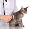 Ветеринарные клиники в Курагино